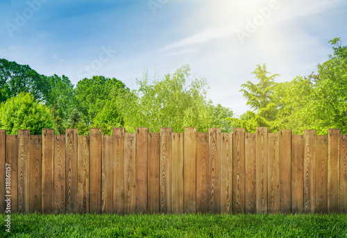Fototapeta trees in garden and wooden backyard fence with grass obraz