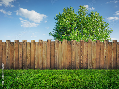 tree in garden and wooden backyard fence with grass Canvas Print