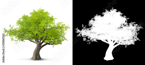 Photo tree isolated on white background with alpha mask for easy isolation 3D illustra