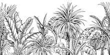 Seamless Border With Black And White Tropical Plants.