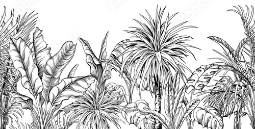 Fotografía Seamless border with black and white tropical plants.