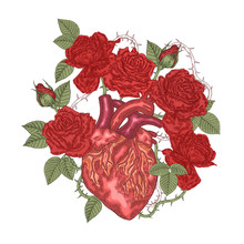 Human Heart With Red Rose Flowers. Vector Illustration Hand Drawn. Romantic Card Or T-shirt Design. Vintage Engraving.