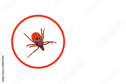 Photograph of a tick close up. White background. Wallpaper Mural
