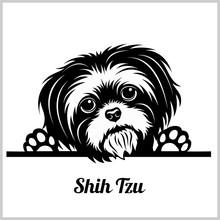 Shih Tzu Dog Breed - Peeking D...