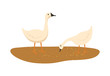 Goose closeup vector, domestic animals eating food laying on ground with mud isolated poultry flat style. Geese breeding and growing in rural area