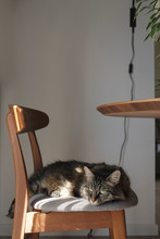 Lovely Cat Lying Down On A Chair