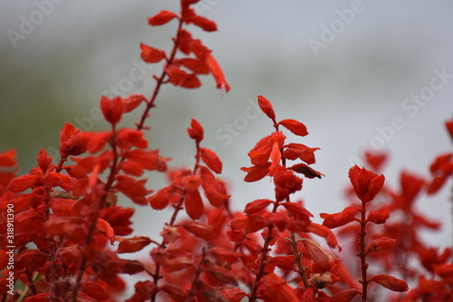 A Red Flowers Plant And Nature - 318911390