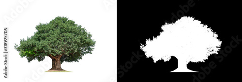 Photo Tree on transparent picture background with clipping path, single tree with clip