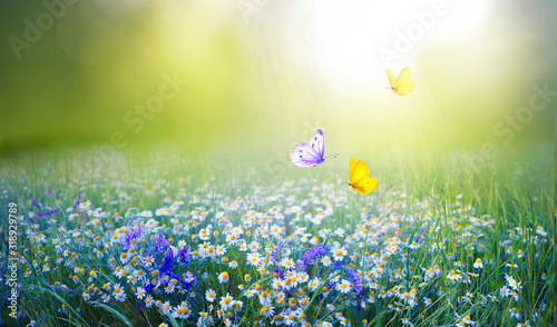Beautiful field meadow flowers chamomile and violet wild bells and three flying butterflies in morning green grass in sunlight, natural landscape Wallpaper Mural