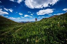 Summer Landscape With Blue Sky...