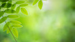 Closeup nature view of green leaf on blurred and bokeh background with copy space for text.