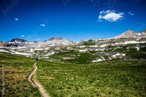 Fotografie, Obraz walking in a mountain meadow