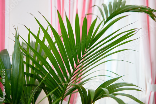 Photo Exotic tropical palm leaves, copy space