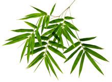 Bambusa Leaf(Bamboo)tropical I...