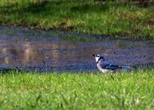 Blue Jay On A Sunny Day!