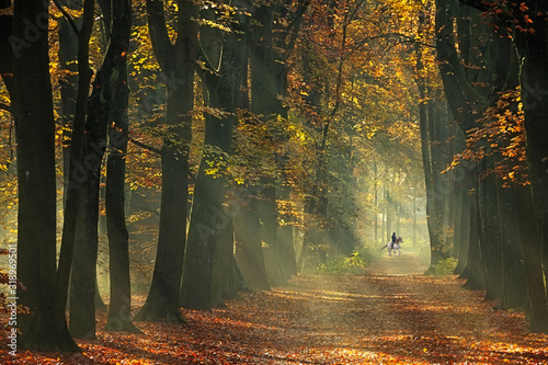 Fotografie, Tablou Horse riding in an early morning forest