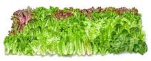 Fresh Salad, Greens, Cabbage C...