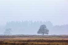 Misty Landscape On The Moors I...
