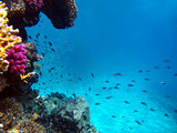 Underwater view of the coral reef and Tropical Fish