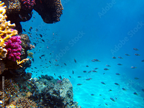 Photo Underwater view of the coral reef and Tropical Fish