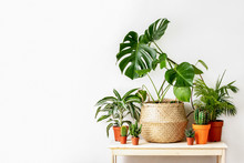 Potted Home Plants Front View, Home Gardening Concept