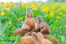 Rabbits Among Spring Green Grass