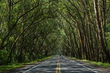 Road In The Forest / TUNEL VERDE BALNEÁRIO PINHAL RIO GRANDE DO SUL