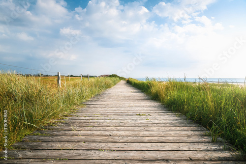 Fotomural Wooden footpath and high grass in sunlight. Sylt summer landscape