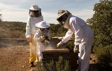 Beekeepers Working Collect Ho...