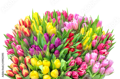 Fototapety, obrazy: Tulip flowers Spring tulip bouquet white background