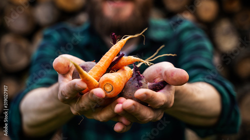 Fotografia Carrots and beets in the man farmer hands in a green plaid shirt