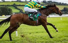 Race Horse And Jockey Gallopin...