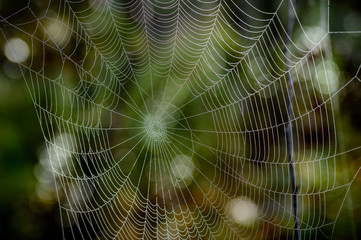 spider web with water drops from the morning dew