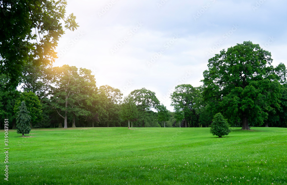 Fototapeta Fresh air and beautiful natural landscape of meadow with green tree  in the sunny day for summer background, Beautiful lanscape of grass field with forest trees and enviroment public park with sun ray
