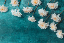 White Dahlia Flowers On Dark G...