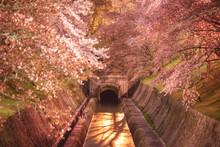滋賀県 琵琶湖疎水(