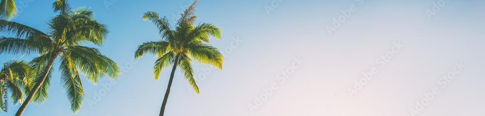 Fototapeta Summer beach background palm trees against blue sky banner panorama, tropical Caribbean travel destination.