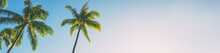 Summer Beach Background Palm T...