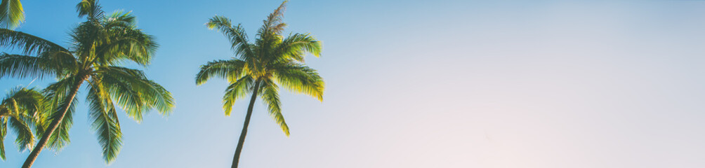 Summer beach background palm trees against blue sky banner panorama, tropical Caribbean travel destination.
