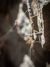 Macro Stick Bug On A Rock