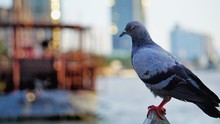 Close-Up Of Pigeon Perching On Railing In City