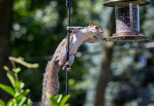 Squirrel Perching On Bird Feeder