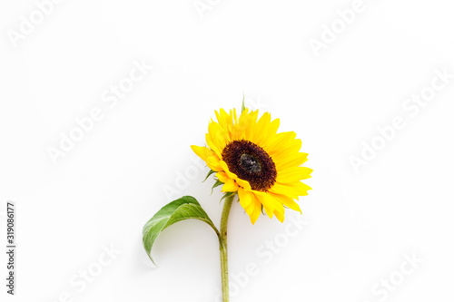 Fototapeta Sunflower - with stem and leaf - on white background top-down copy space