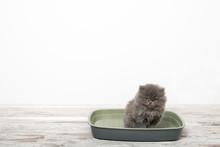 Small Kitten In Plastic Litter...