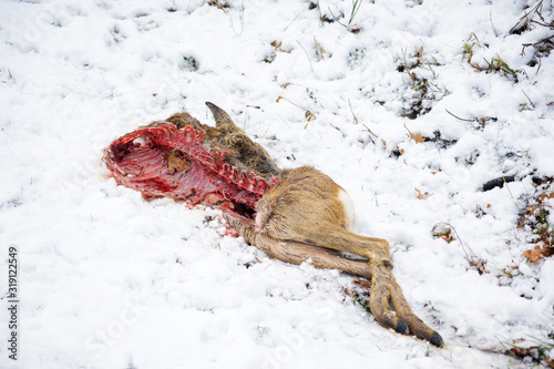 Dead Corpse cadaver of a deer in the snow Wallpaper Mural
