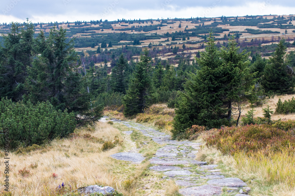 Stone path in the Krkonose/ Giant Mountains national park, Czech republic/Poland borders
