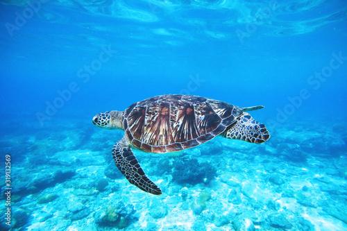 ocean-turtle Canvas Print