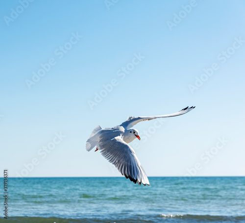 Fotografia Seagull Flying Over Sea Against Clear Sky