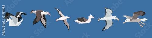 albatross bird of the southern seas and antarctica Fototapet
