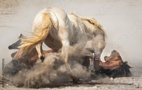 Obraz na plátně Two Horses Fighting At Field
